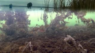 Окунь и Мормышка. Зимняя рыбалка с подводной камерой