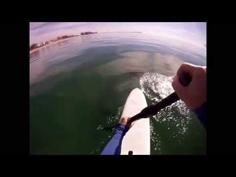 Stand Up Paddle Boarding w/ Dolphins!! Puerto Penasco Mexico