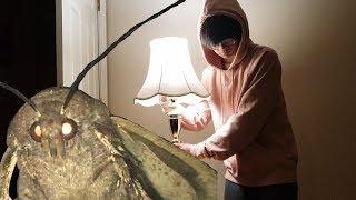 summoning the lamp moth at 3am (scary)