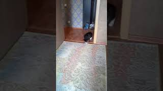 Коту чижику исполняется 1 год!