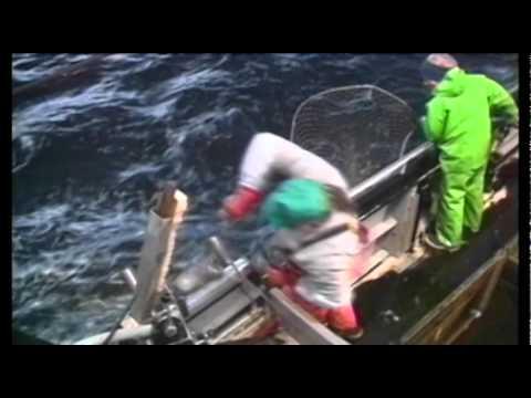 Придонные рыбы Аляски