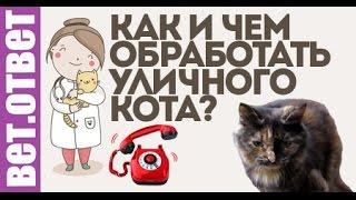 Чем обработать кошку? Новая рубрика- Видео ответ