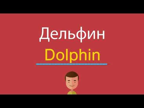 Как читается дельфин по английски