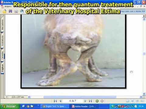 A dog cured with Auto-hemotherapy and vibrational essences. MULT LANGUAGES CC