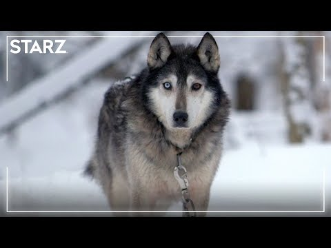 'It Can Be Stopped' Teaser | Sled Dogs | STARZ Documentaries