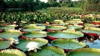 Baixar Mato Grosso é Lindo! - Pantanal/MT!