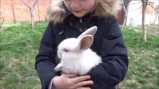 Видео для детей. Погоня за кроликом.(Саша помогает ловить кролика и достает яйца из-под курицы, которая спокойно реагирует на такую наглость., 2016-03-19T13:17:10.000Z)
