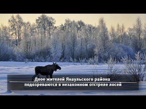 UTV. Новости севера Башкирии за 5 марта (Нефтекамск, Дюртюли, Янаул)