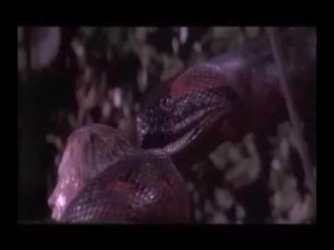 Snake & Naga Vore Scenes!