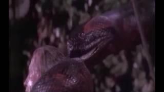 Video Snake & Naga Vore Scenes! download MP3, 3GP, MP4, WEBM, AVI, FLV Juli 2018
