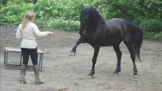 """Presentazione """"Gottero Ranch"""" cavalli Murgesi"""