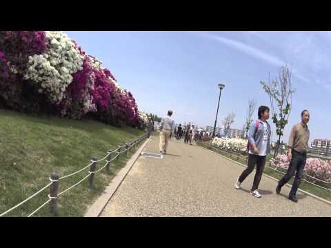 [HDR-AS100V] Azalea festival at Asakayama Water Purification Plant, Sakai c., Osaka , Japan