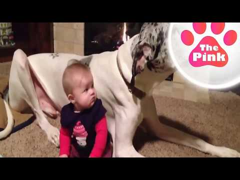 Dogs and Babies, Surfing Dog - Video #27