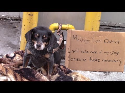 Would You Help A Homeless Abandoned Dog?