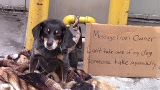 Would You Help A Homeless Abandoned Dog?