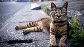 Паразиты у котов .опасность на улицах!