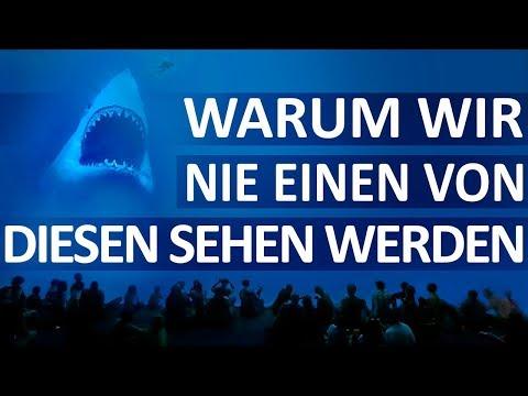 Warum kein Aquarium einen Weißen Hai hat!