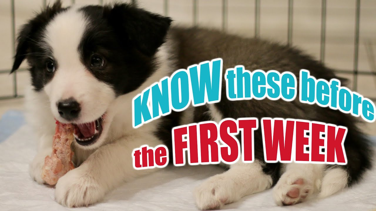 Download New Puppy Tips: 7 Lessons in 7 Days
