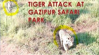 Tiger Attack at safari park || দেখুন কিভাবে বাঘের আক্রমনে পড়ল বাসের যাত্রীরা