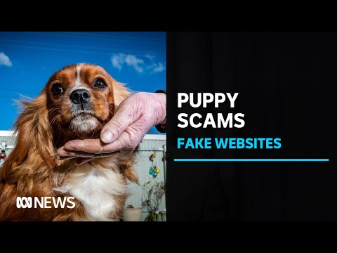 Puppy Scams Have Cost Australians $1.3m This Year. One Group Is Fighting Back | ABC News