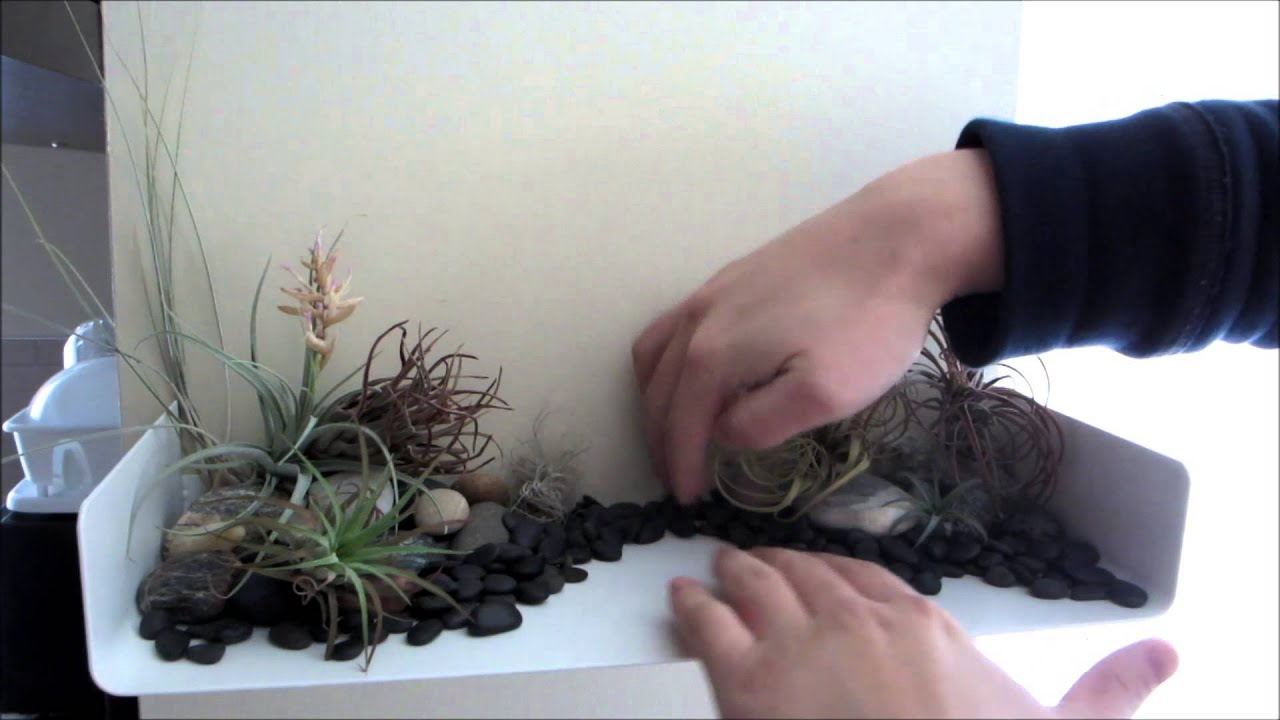 Air Plant Display Tillandsia Air Plant Layout Display How To Display Caeae