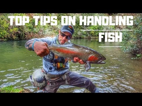 friday-filler---how-to-handle-fish-better