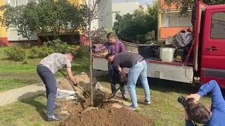 Jak wygląda sadzenie drzew przez Fundację Immo pokazuje Maria Loskot