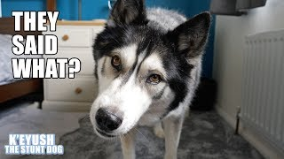 talking-dog-replies-to-his-fans-and-has-existential-crisis