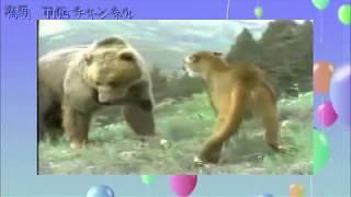 ジャングル最強決定戦、 かな? トラvsクマ https://youtu.be/p5iRA5veG...