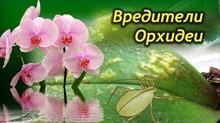 видео Мошки в орхидеях - как избавиться и провести профилактику