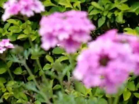 flower garden haritha valley resort