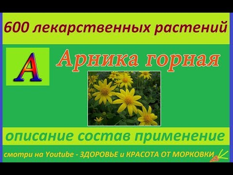 арника горная 600 лекарственных растений