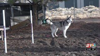 Furry Friends: Balto's a happy, smart husky pup