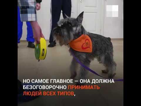 Собаки лечат пациентов психбольницы в Екатеринбурге   E1.RU