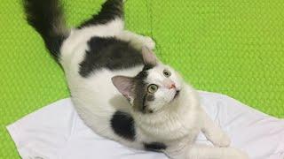 Konuşan kedi.Akıllı kedi.Sevimli kedi .ŞANS
