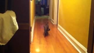 Swinging Cat Pooch (Belly)