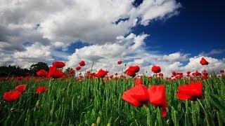 藤野とし恵 - おんなの花ごよみ