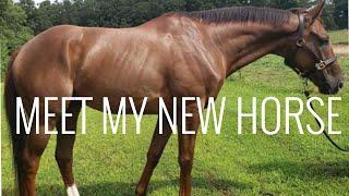 NEW HORSE VLOG | MEET LEON