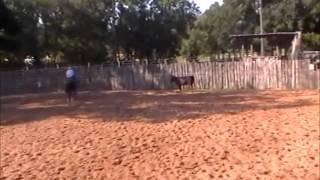 CUTTING HORSE, Sorrel Mare 2006 JB Fancy Cat - www.fredbrayranch.com