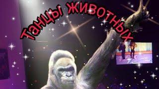 танцы животных. смешное видео.