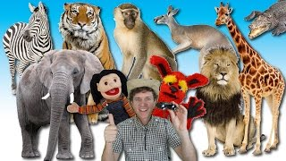 What Do You See? Song | Wild Animals | Learn English Kids thumbnail