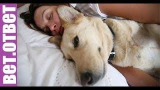 Где спят ваши собаки? Добавки в кормах. ВетОтвет 30