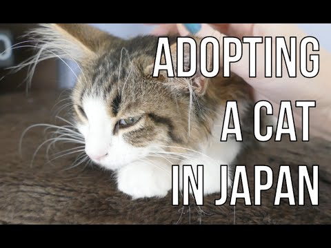 Adopting a cat in Japan | WARNING: sad cat story