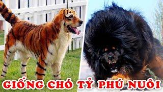 15 Giống Chó Lạ Đắt Nhất Chỉ Dành Cho Tỷ Phú Nuôi