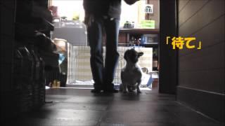 1日15分犬のしつけを7日間でマスターする方法」 本気の方はDVDで→http:/...