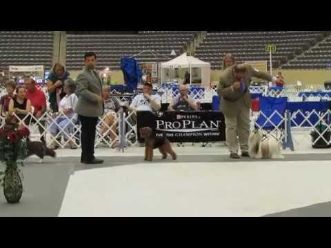 Conformation Dog Show 2014, Standard Poodle, Shih Tzu, Bloodhound, Cocker Spaniel, Giant Schnauzer