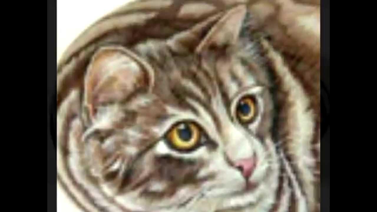 РИСУНКИ ЖИВОТНЫХ НА КАМНЯХ - animalworld com ua