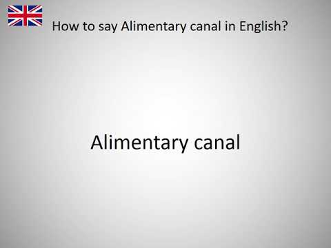 How to say Alimentary canal in English?
