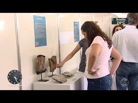 Feira ajuda jovens a escolher uma profissão no Espírito Santo   SBT Notícias (27/10/17)