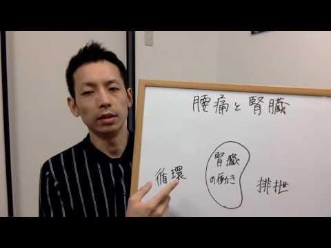 腰痛と腎臓の関係を知っていますか腰痛と内臓2 和歌山市の相ai整体院